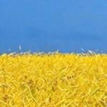 cropped-ukrainos_veliava_kvieciai.jpg